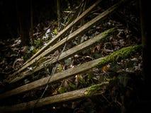 Деталь загородки распадаться внутри темные окрестности леса стоковые фото