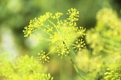 Деталь зеленых растений с малой глубиной поля стоковая фотография