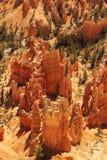 Деталь каньона Bryce Стоковые Изображения RF