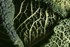 Деталь листьев капусты стоковое фото
