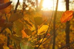 Деталь листьев осени снятая в лесе Стоковое Изображение RF