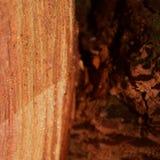 Деталь на отрезке древесины стоковые изображения