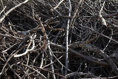 Деталь отрезанных ветвей Стоковое Изображение RF