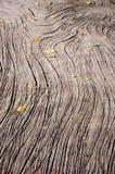 Деталь песчаника Стоковое Изображение