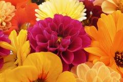 Деталь предпосылки голов цветка флористической стоковая фотография