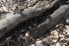 Деталь распадаться деревянная стоковая фотография rf