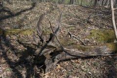 Деталь распадаться деревянная стоковое изображение rf