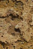 Деталь ржавчины, корозия металла стоковое фото