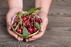 Деталь рук держа сладостные вишни в шаре Avium сливы Стоковая Фотография