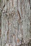 Деталь старой коры дерева в парке Стоковые Фото