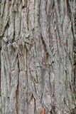 Деталь старой коры дерева в парке Стоковое фото RF