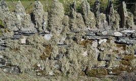 Деталь стены стоковое изображение rf