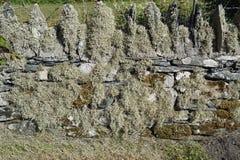 Деталь стены стоковые изображения rf