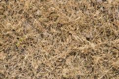 Деталь сухой травы Справочная информация Стоковое Изображение RF