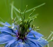 Деталь цветения стоковая фотография