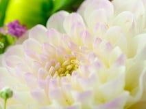 Деталь цветка свадьбы Стоковое Фото