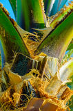 Деталь Palmtree Стоковые Изображения RF