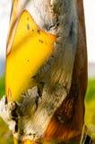 Деталь Palmtree Стоковое фото RF