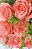 Деталь Rose Стоковая Фотография RF