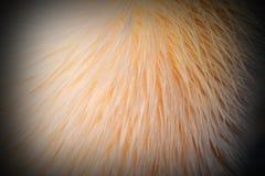 Детали на больших пер пеликана Стоковые Изображения