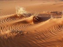 Детали песчанной дюны стоковые фотографии rf