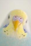 Детали попугая волнистого попугайчика Стоковые Фото