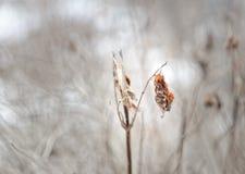 Детали природы зимы Стоковые Изображения RF
