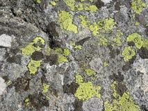 Детали природы: много различных лишайников растут на серой поверхности утеса Стоковое фото RF