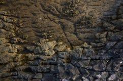 Детали Seascape Хорватии Стоковое фото RF