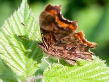 Детальный макрос бабочки на лист Стоковое фото RF