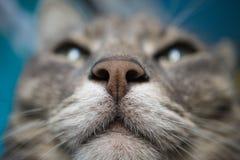 Детальный макрос снятый рыльца намордника кота стоковые изображения rf