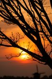 Деталь ветвей дерева в заходе солнца Стоковые Изображения