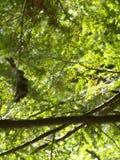 Деталь ветвей сосны Стоковые Фотографии RF