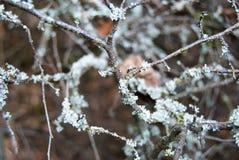 Деталь ветви дерева с мхом Стоковая Фотография