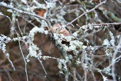 Деталь ветви дерева с мхом Стоковая Фотография RF