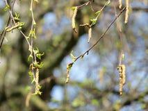 Деталь ветви дерева Стоковые Фото