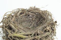 Деталь гнезда птицы с изолированной предпосылкой Стоковые Фотографии RF