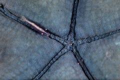 Деталь голубых морских звёзд и симбиозной креветки Стоковое Изображение