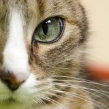 Деталь глаза кота Стоковое Фото