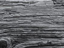 Деталь дерева для представления Стоковое Изображение RF