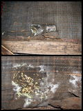 Деталь деревянного грибка Стоковое фото RF