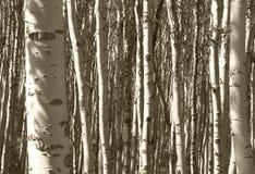 Деталь леса в яшме альбатроса Канада стоковая фотография