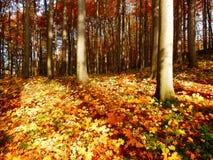 Деталь леса осени Стоковые Изображения