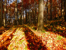 Деталь леса осени Стоковая Фотография