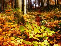 Деталь леса осени Стоковые Фотографии RF