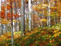 Деталь леса осени Стоковое Изображение RF