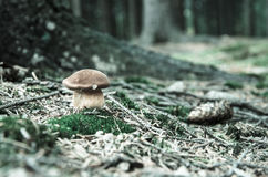 Деталь леса Стоковое Фото