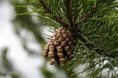 Деталь леса Стоковая Фотография