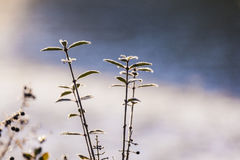 Деталь замороженной голубой ягоды Стоковая Фотография