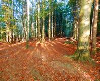 Деталь захода солнца леса осени Стоковые Фото